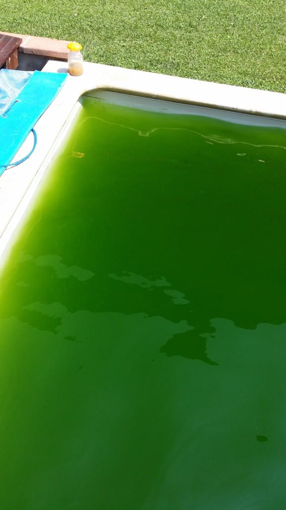 Foto piscia con acqua verde